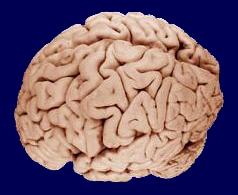 Brain_090407